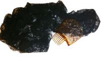 Peineta of Carey and Black Lace Mantle